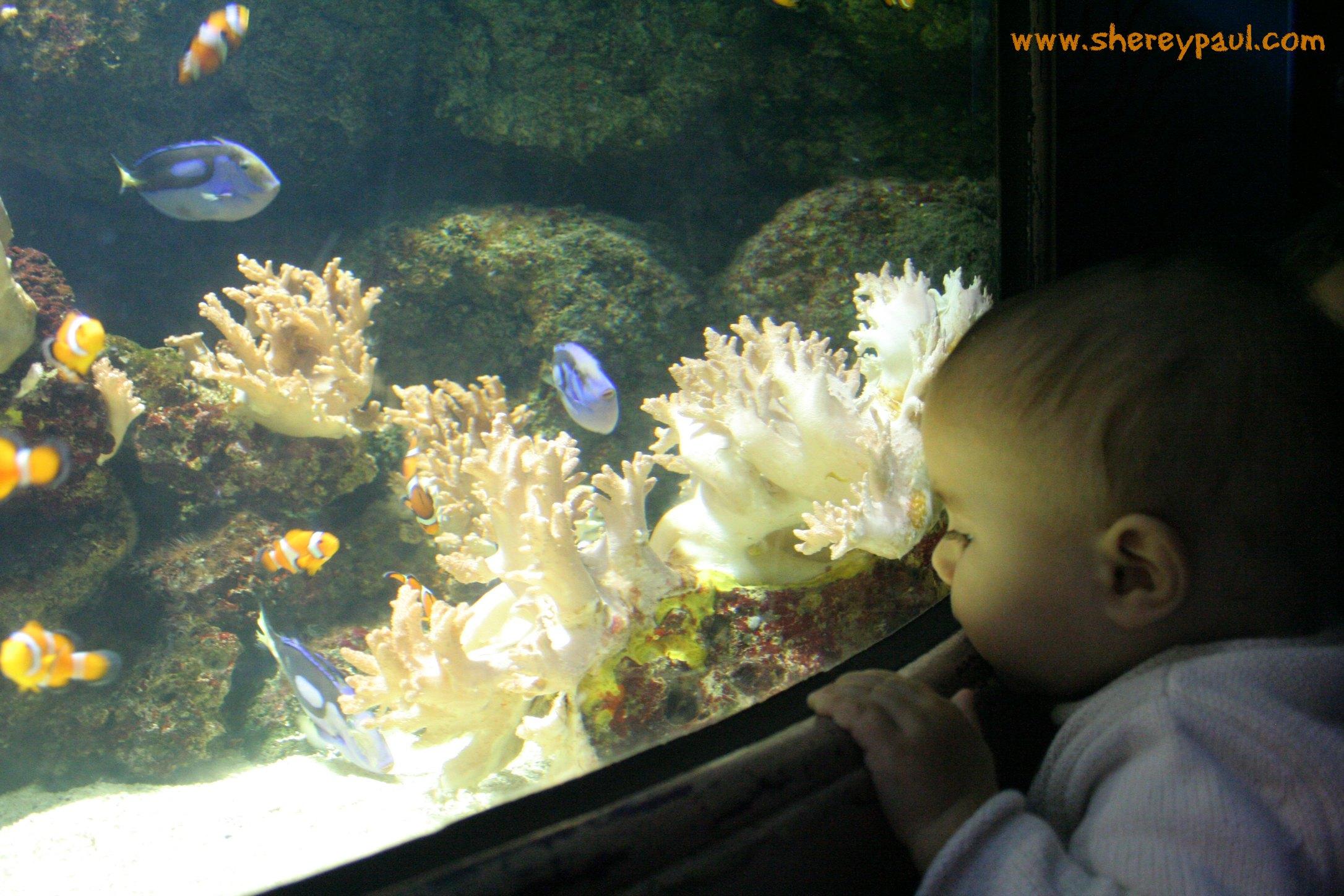 Con Nemo y Dory en el Sea life London – mm