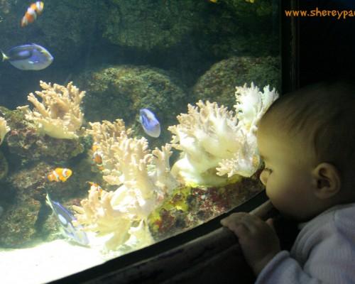 Con Nemo y Dory en el Sea life London - mm